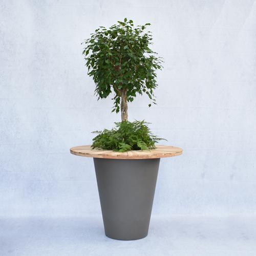 Bol Com Statafel.Bol Ficus In Olla Dark Grey Met Onderbeplanting En Houten Blad