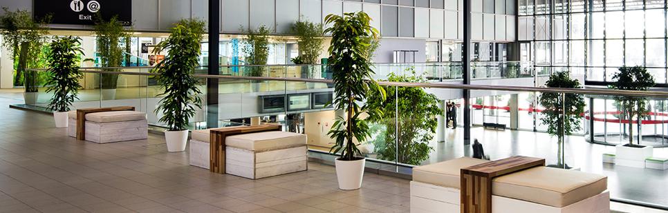 Bolvaasje met 1 bloem - Decoratie kantoor ...